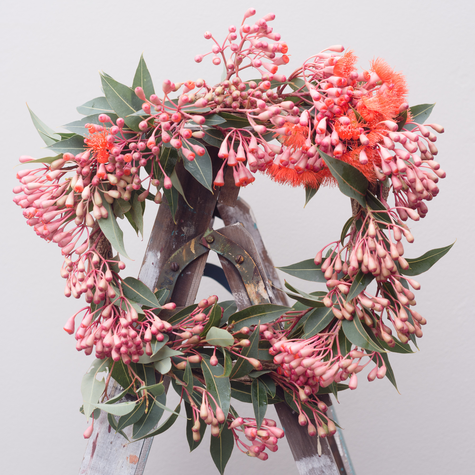 eucalyptus flower wreath
