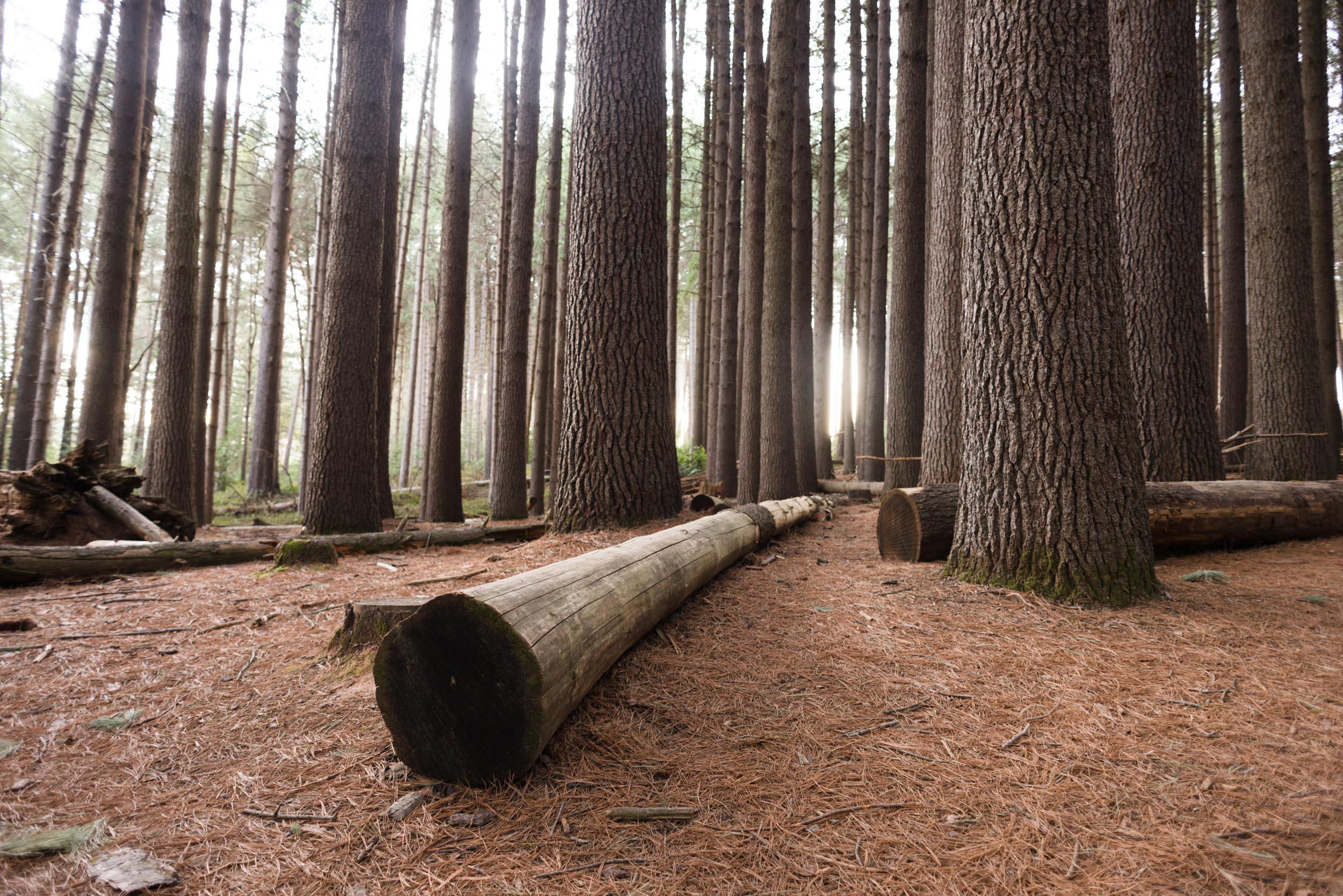 sugar pine walk tumut nsw