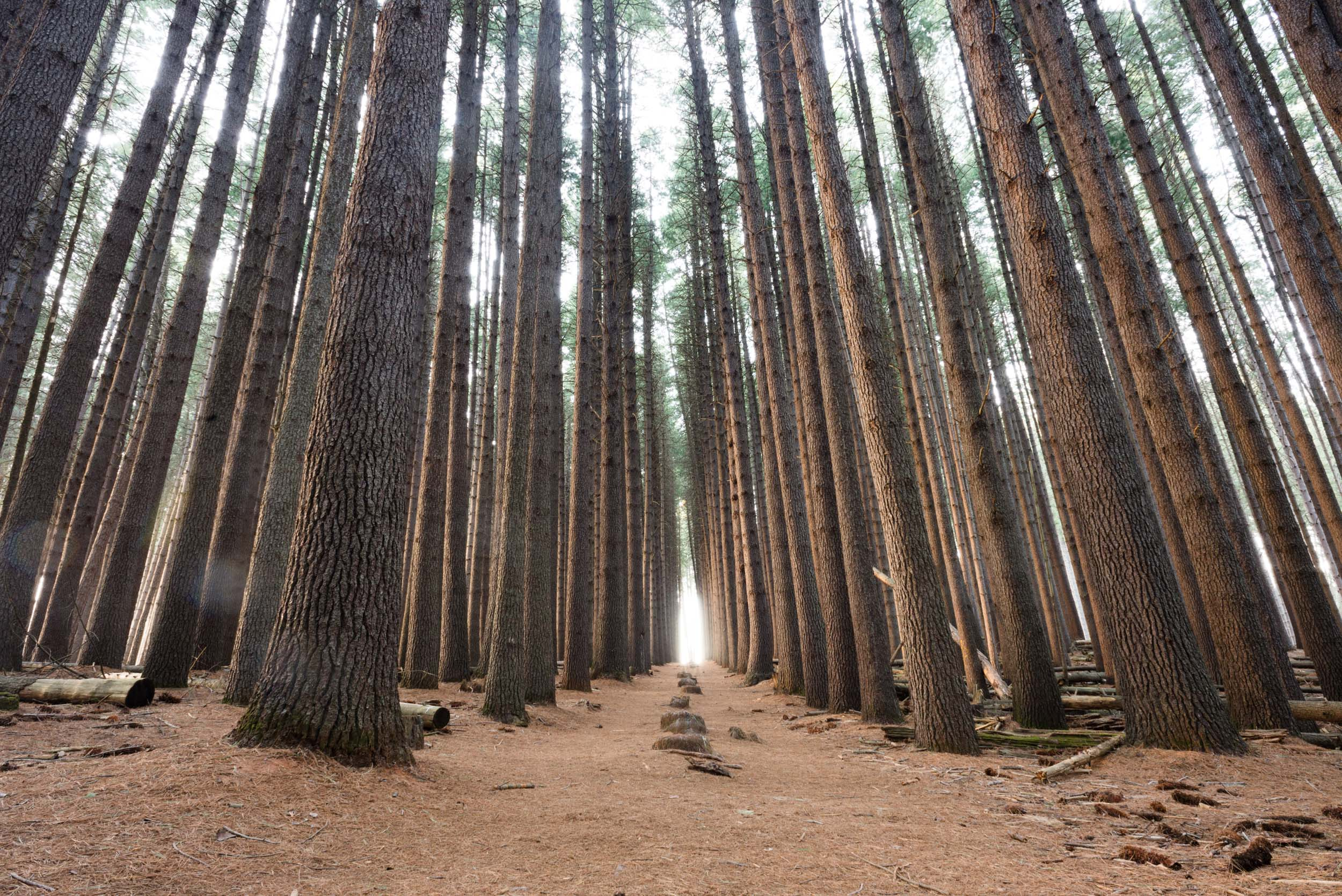 sugar pine walk nsw