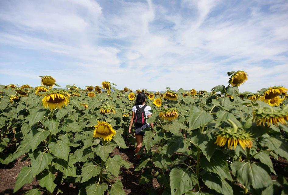 Jodie sunflowers.jpg