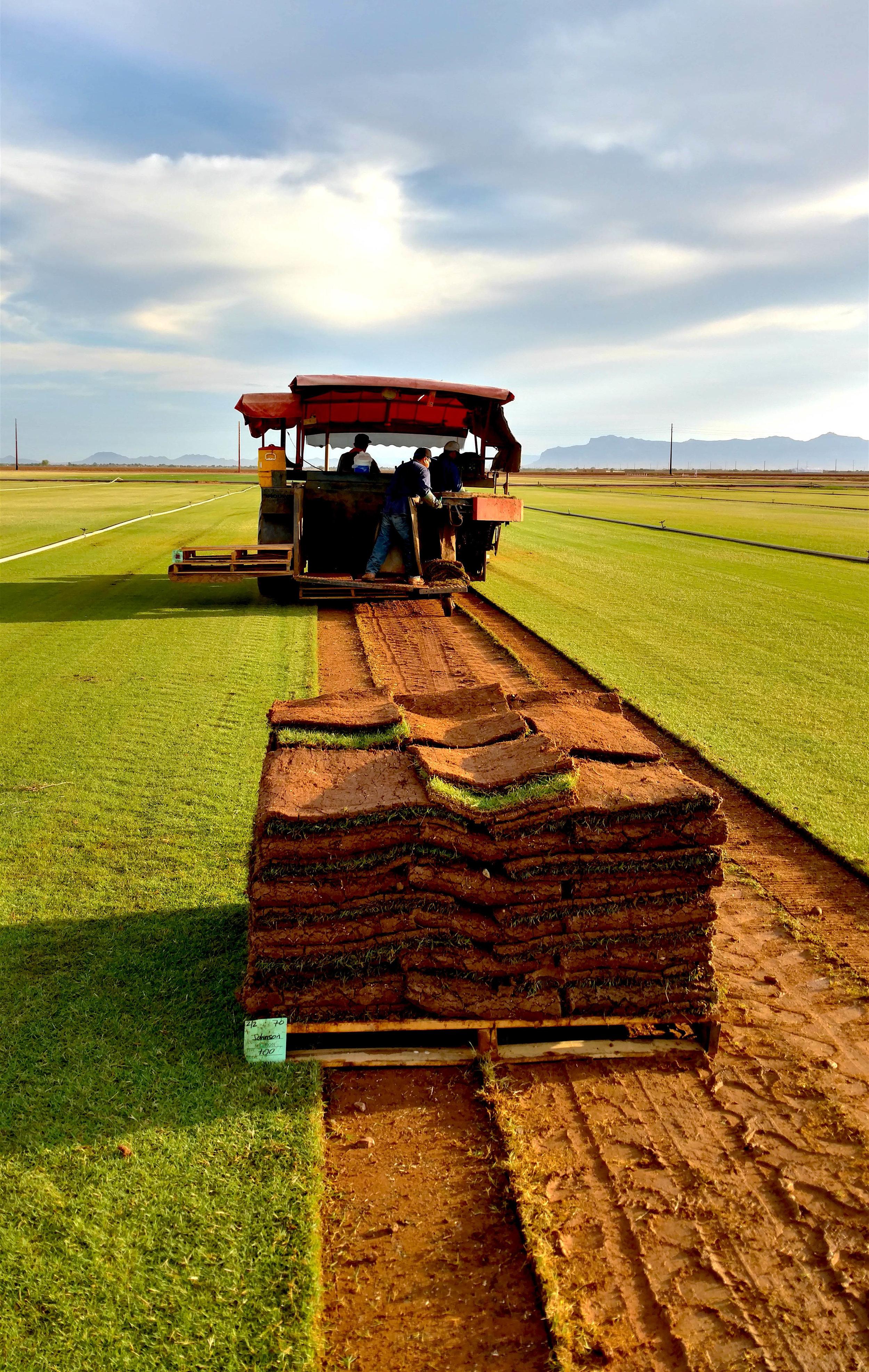 BrooksTurf Harvest.jpg
