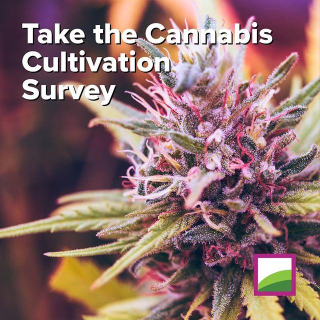 Take our survey! 🌿🗄 https://tinyurl.com/survey421group