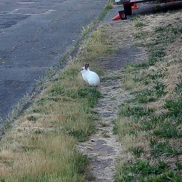 Is a white rabbit in my path meaningful?