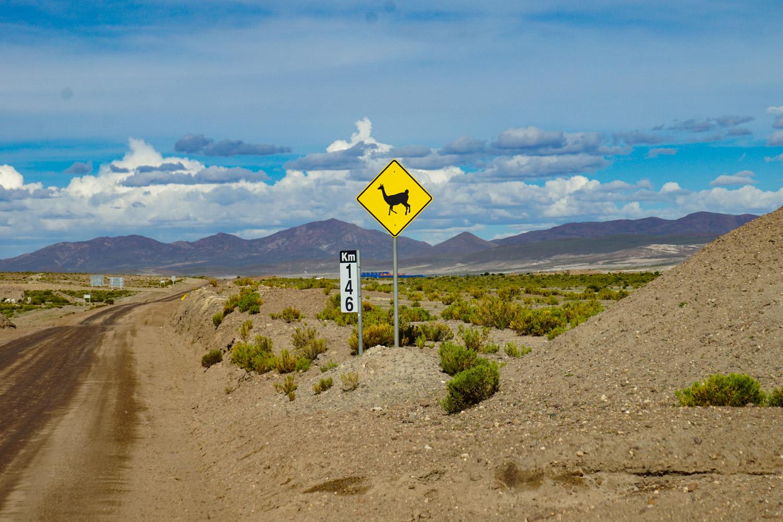 A common sight in Bolivia: Lama crossings