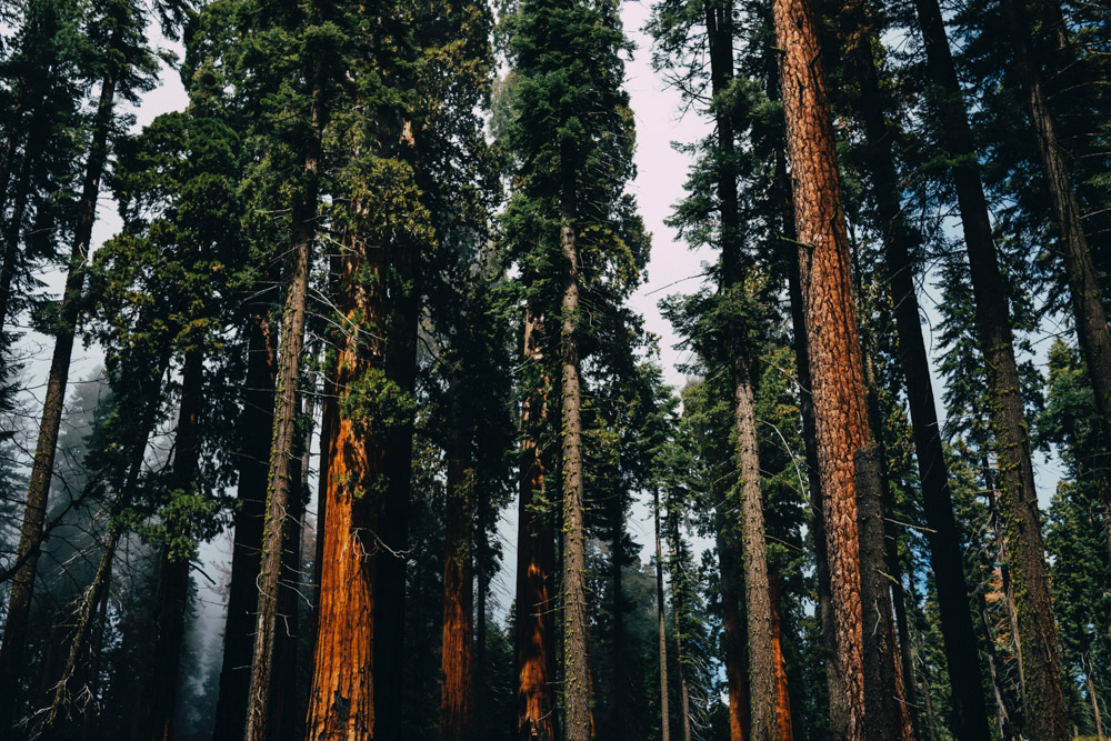 Sequoia_National_Park.jpg