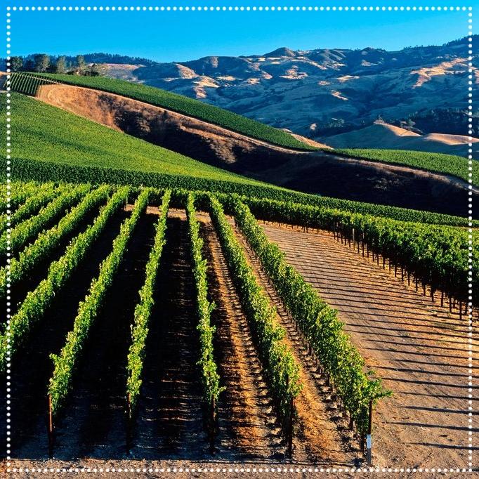 Napa-Valley-California-Wines