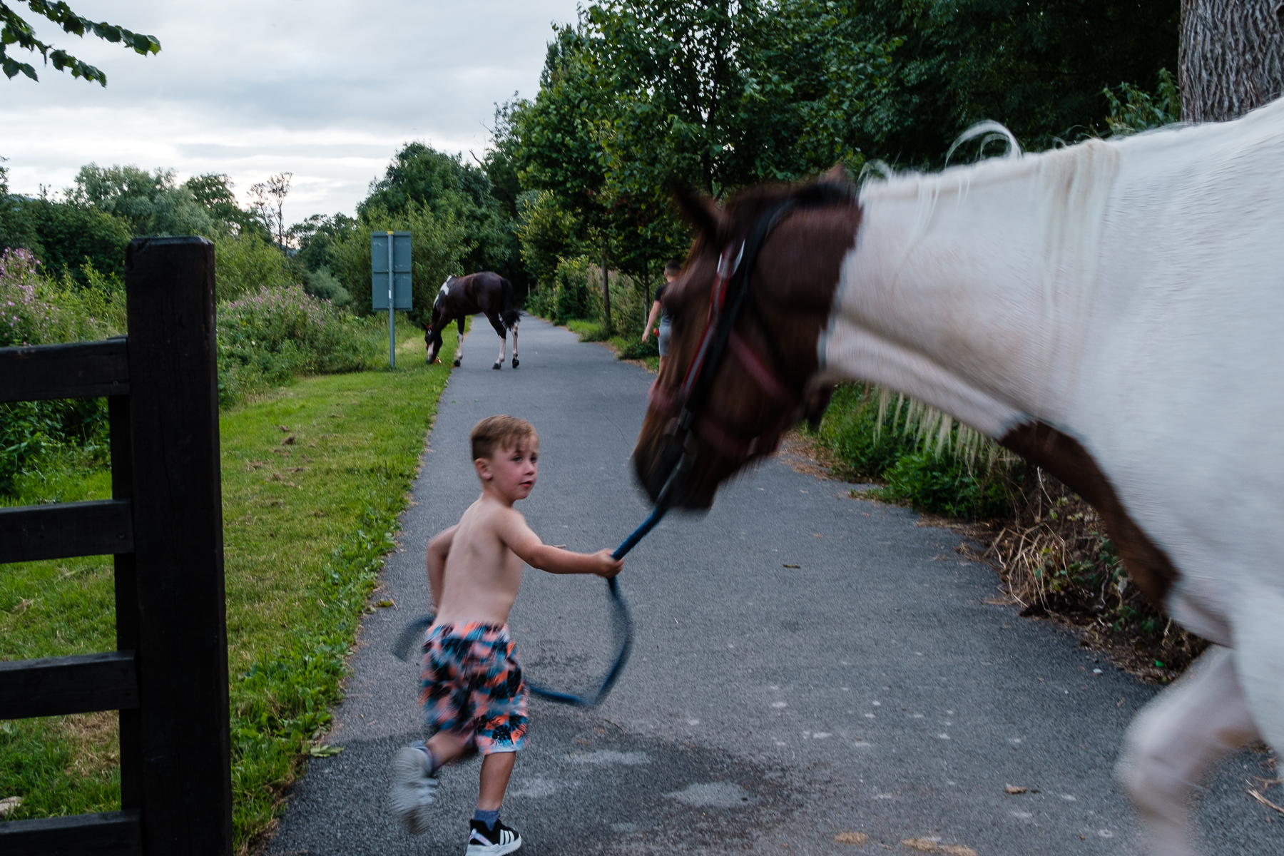 Suir Horses (6 of 7).jpg
