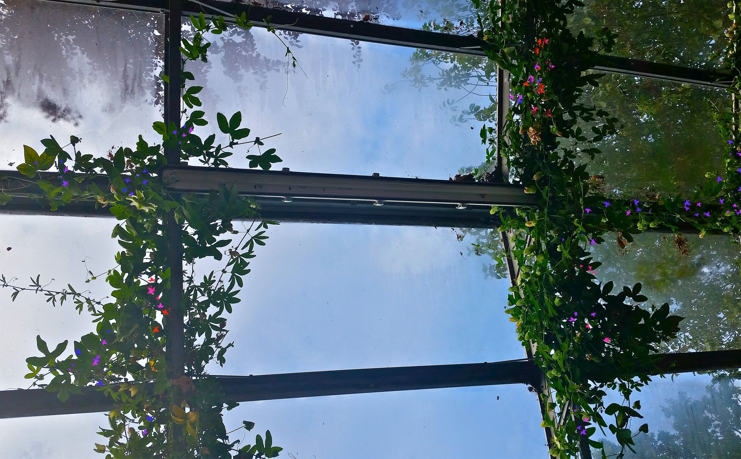 Glasshouse roof (1) copy.jpg