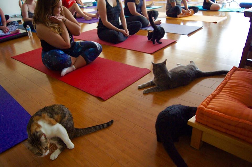 all yoga with cats Photos by: Kelly Carr
