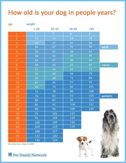 age_chart_dogs_v3.2.jpg