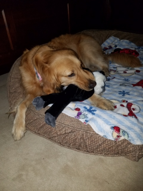 Lacie happy at home with her toy