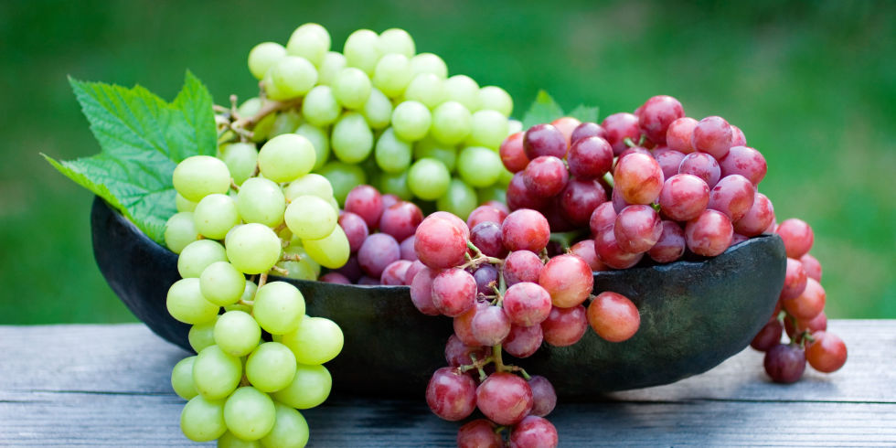 Even a small amount of grapes can cause kidney failure in dogs and we don't know what makes some dogs more sensitive than others!  Better to be safe than sorry!