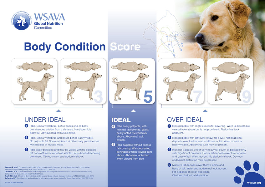 Body Condition Scoring chart for dogs - you can also click the link above