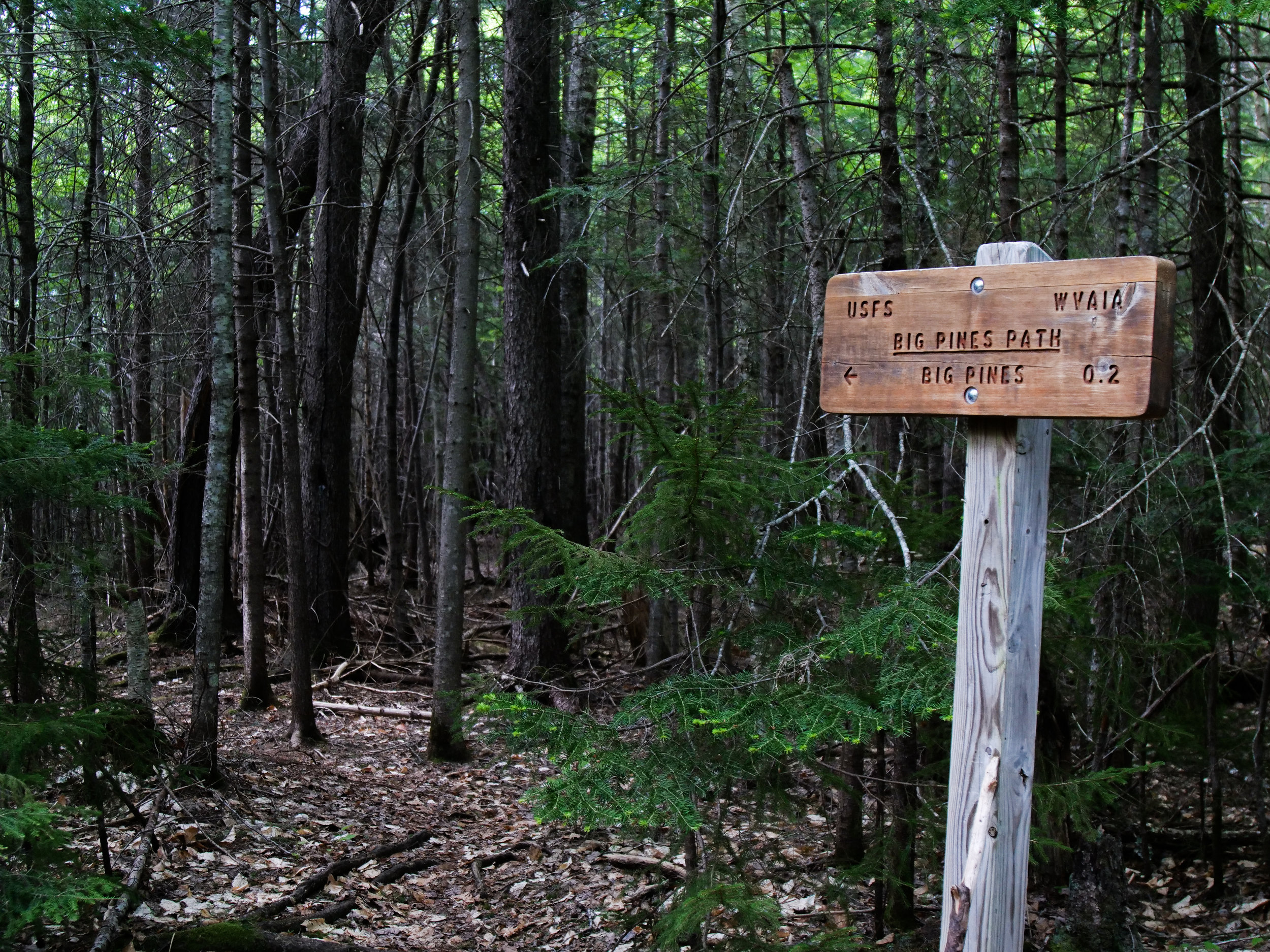 Big Pines Trail Sign