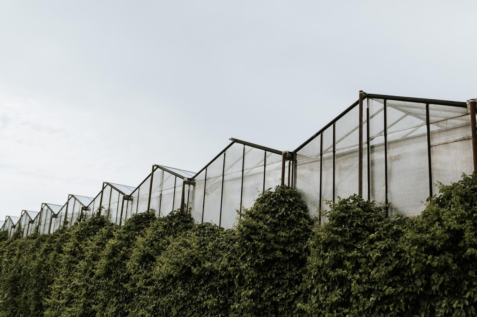 Wedding-Greenhouse-Amsterdam84.jpeg