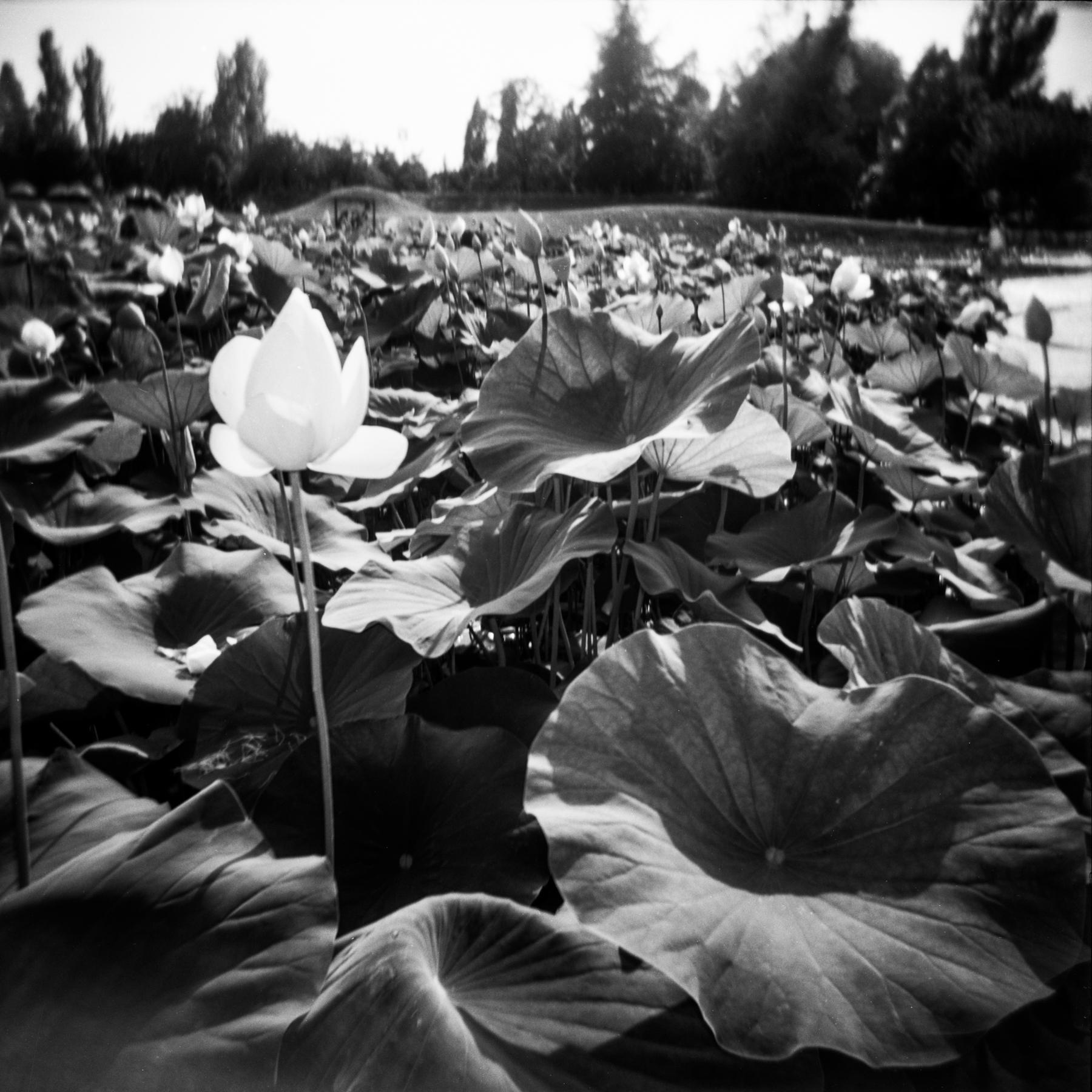 blackandwhiteparisphotography-37.jpg