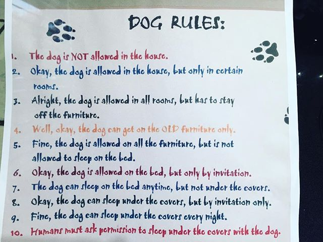 Dog Rules  #dog #mansbestfriend