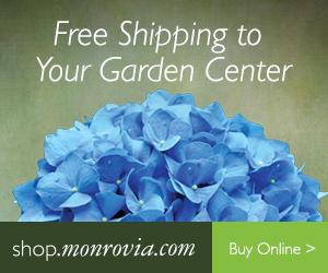 Online Store Ivy Trails Gift Garden