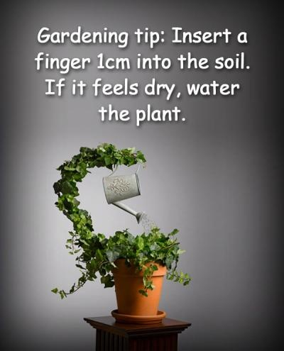- Most new summer plantings will require watering daily, gradually cut back your watering schedule over timeTo reduce watering needs work organic matter into your soil & cover  exposed soil with mulchConsider utilizing rain barrels at the base of gutters to capture free water