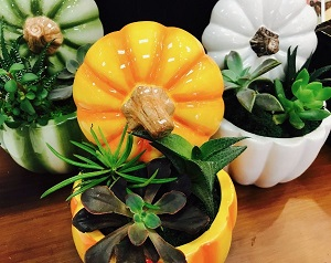 Get Creative! - This week at our Green Bay location we are offering our customers the opportunity to come in and plant your own succulent centerpiece in a ceramic pumpkin! The cost is $15 and includes choice of three succulents, 4.75