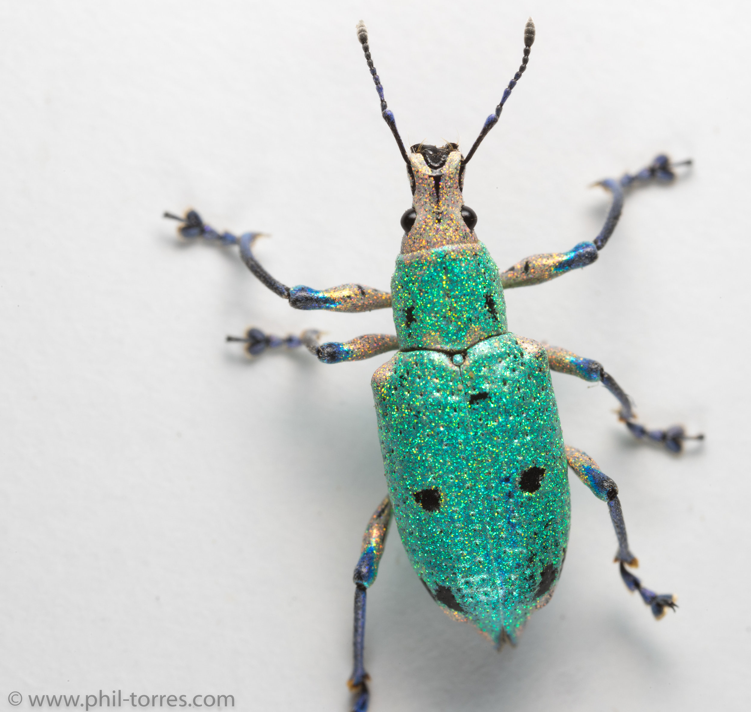 sparkly glitter beetle