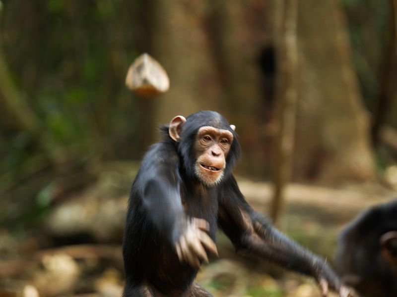 fists_monkey.jpg