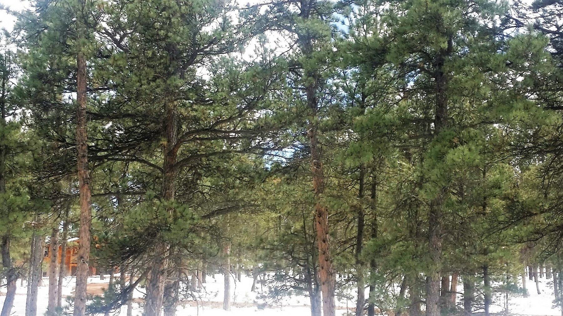 25-631-Trees4.jpg