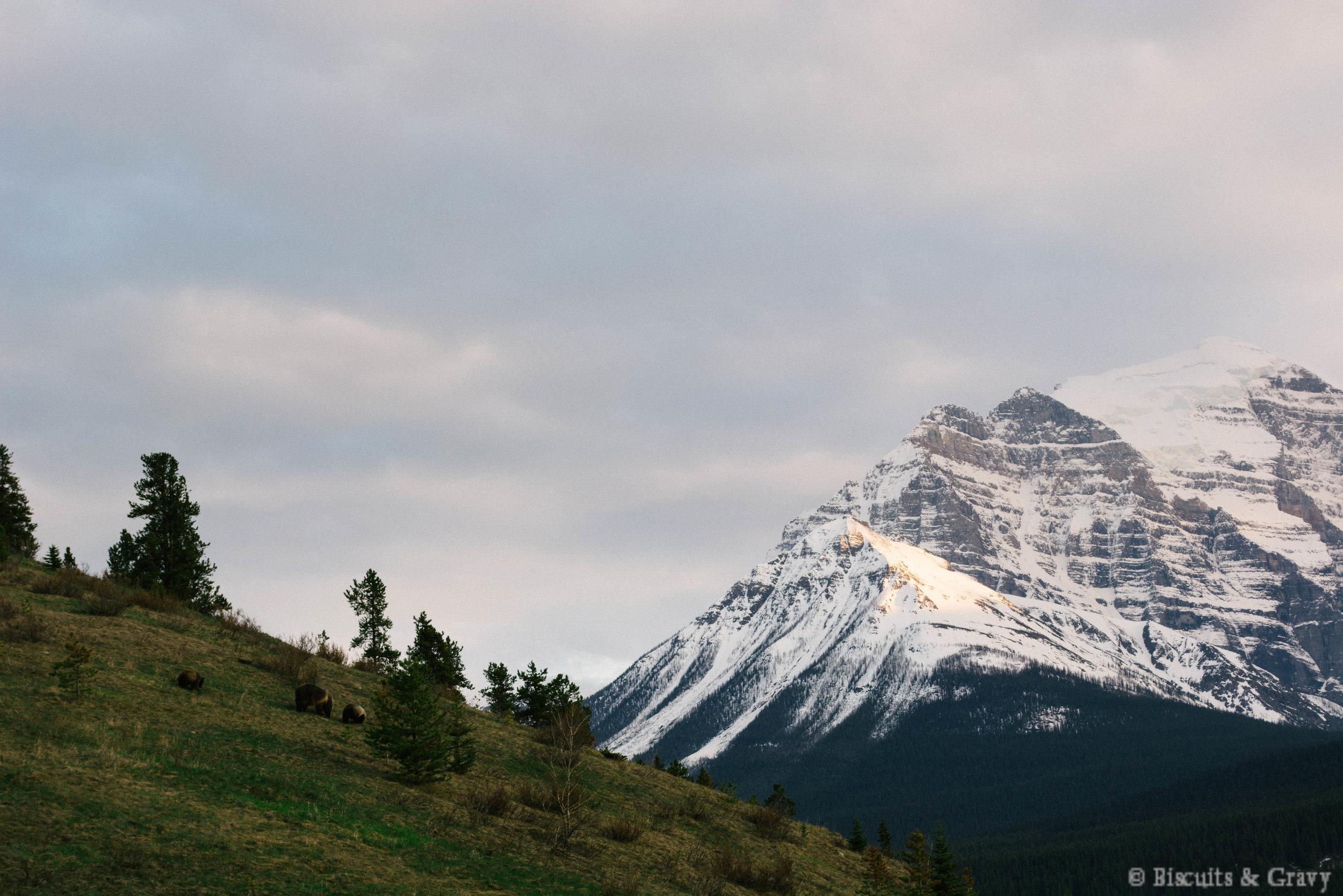 Banff (36 of 73).jpg