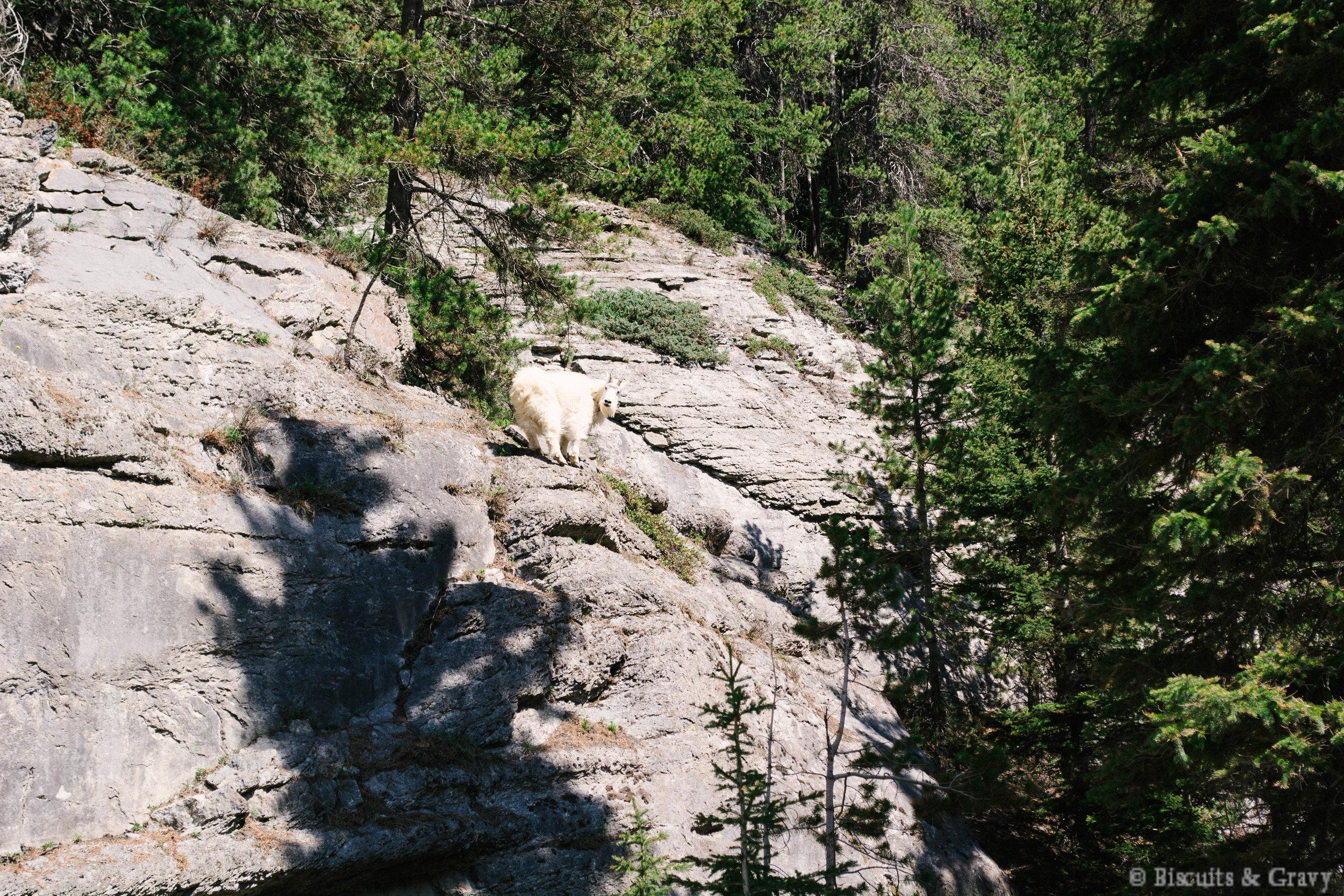 Banff (66 of 73).jpg