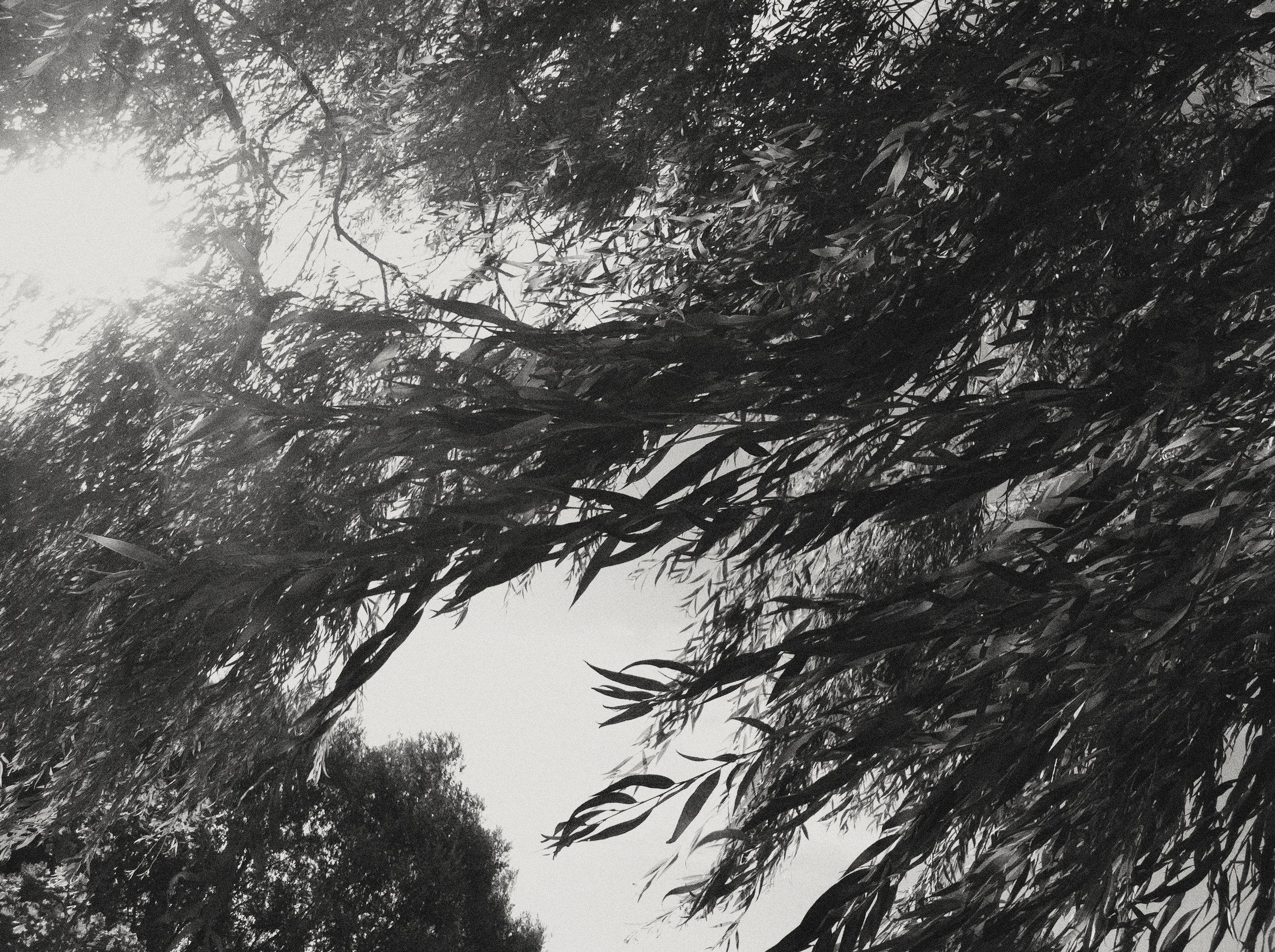 Ashley Dawn Logan | Willow Tree | Kelowna BC