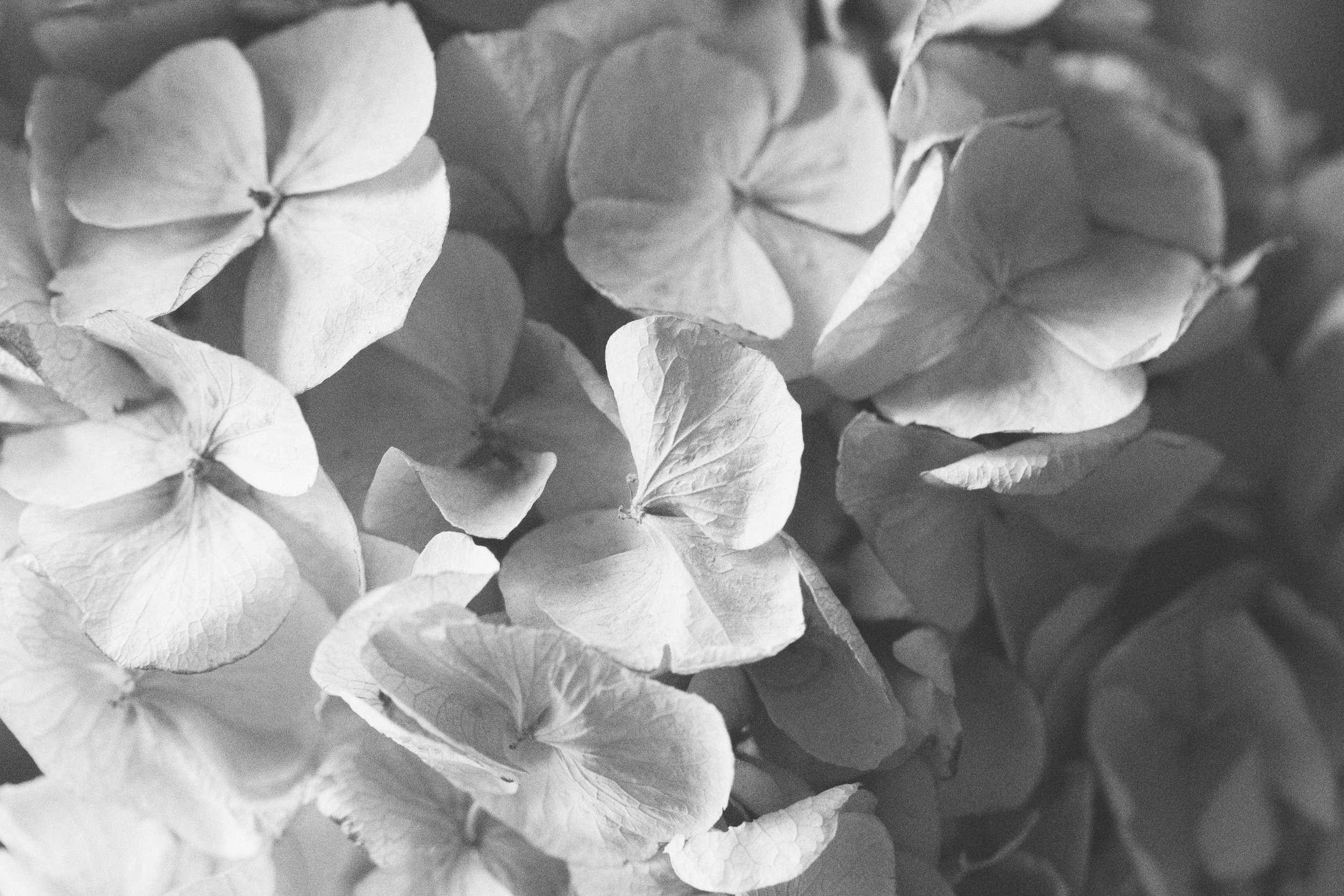 Ashley Dawn Logan | Floral