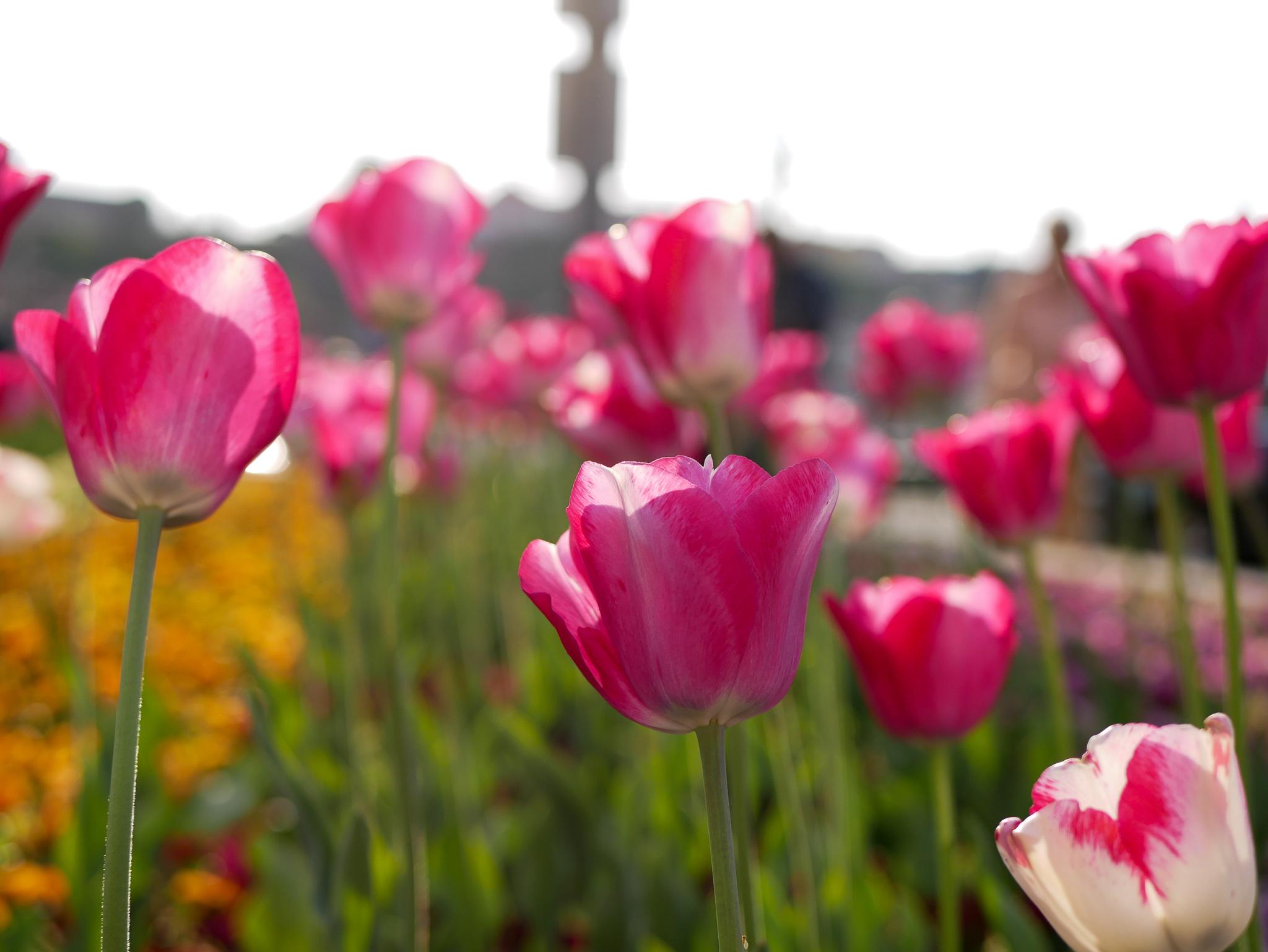 Det fanns så mycket vackra blommor i Budapest!