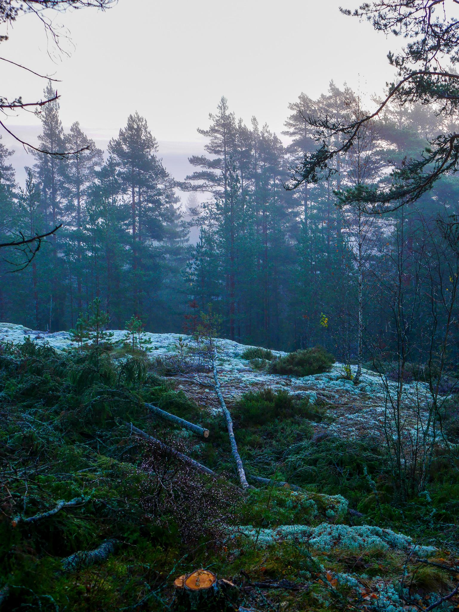 Magisk morgon på lande förra veckan. Oktober har bjudit på mycket fint också! <3
