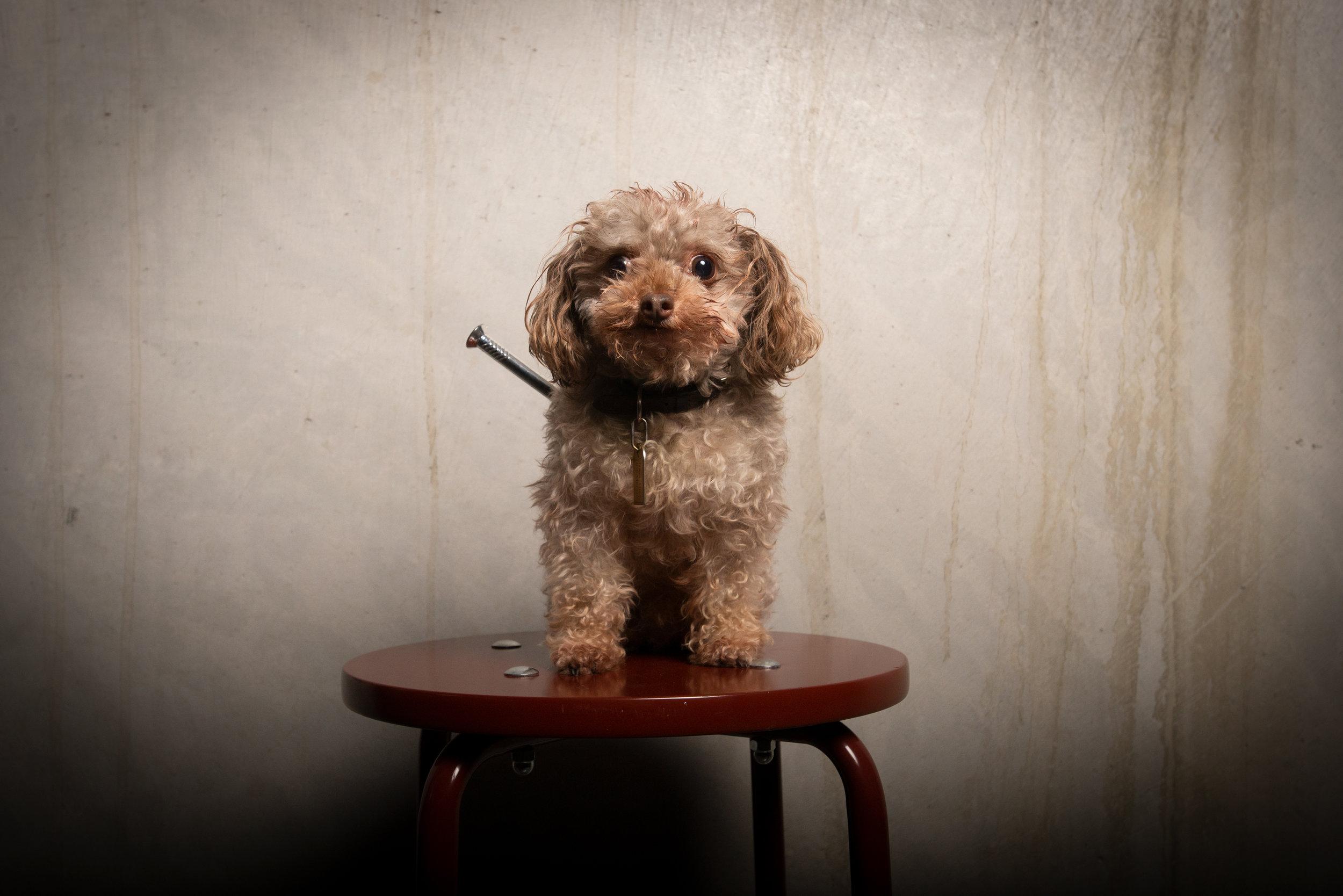 Hunden kenzo var nog helt klart kvällens gulligaste. Foto: Alexander Horn/future film.