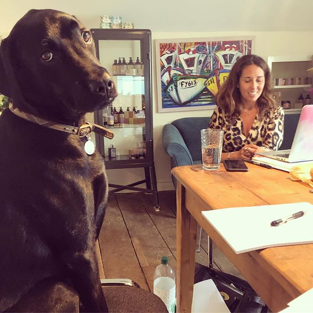 Had the best day strategising with @little_soap_co and their star employee Henry! Love when a work day includes dog walks in Cotswold orchards. Thanks for such a warm welcome today. BTW... if you haven't had the chance to use their products yet, they are just gorgeous. ❤️