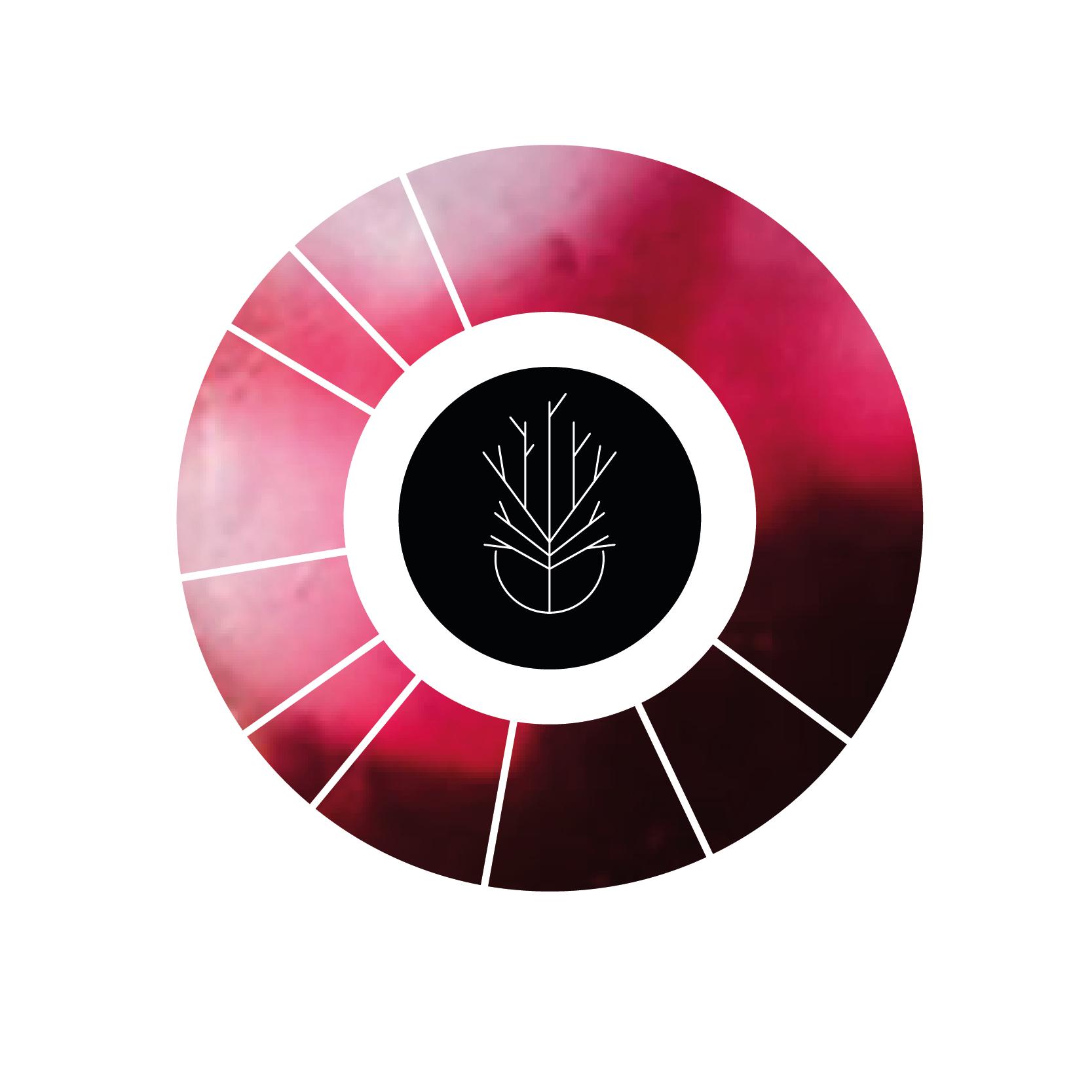 FlavourWheel-01.png