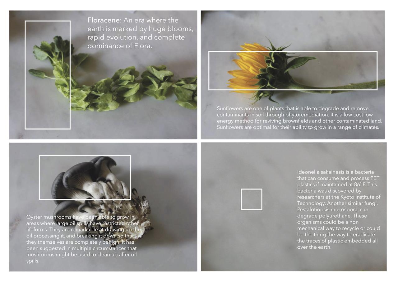 floracene 2.jpg