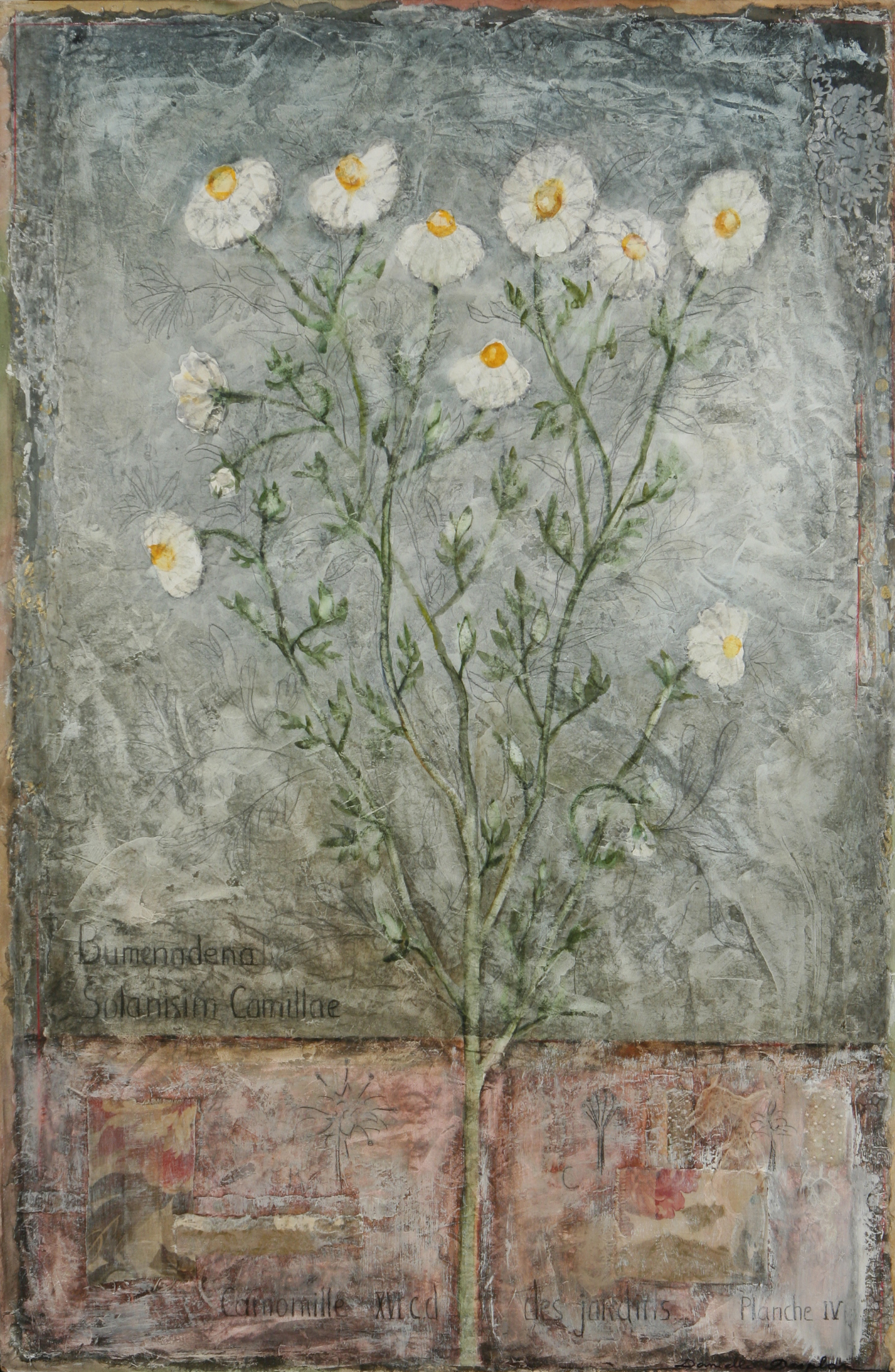 """Camomille  36"""" x 24"""""""