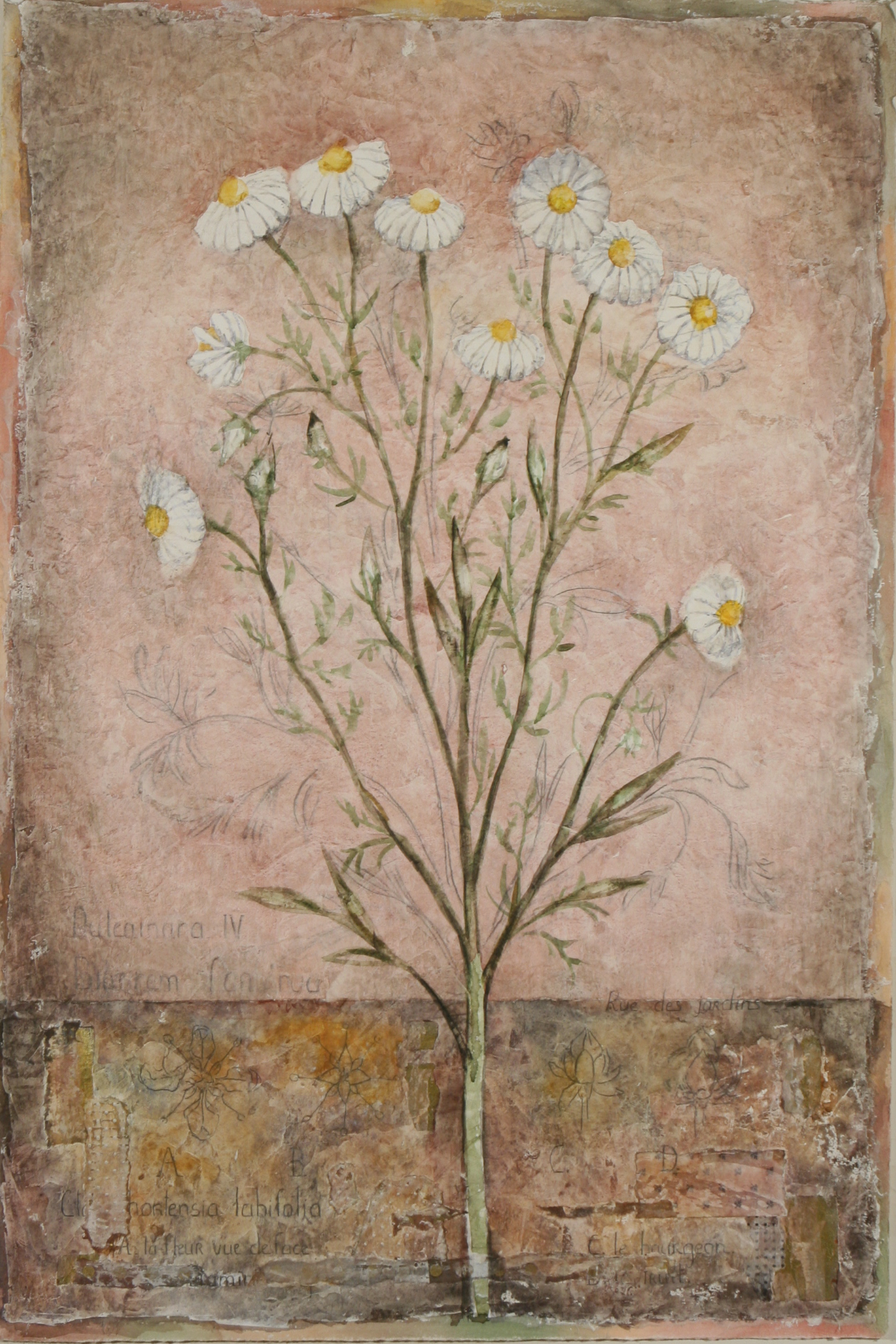 """Camomille Rose  36"""" x 24"""""""