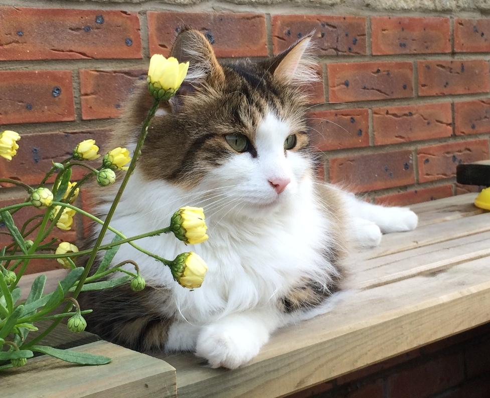 Cat Sitting Hull