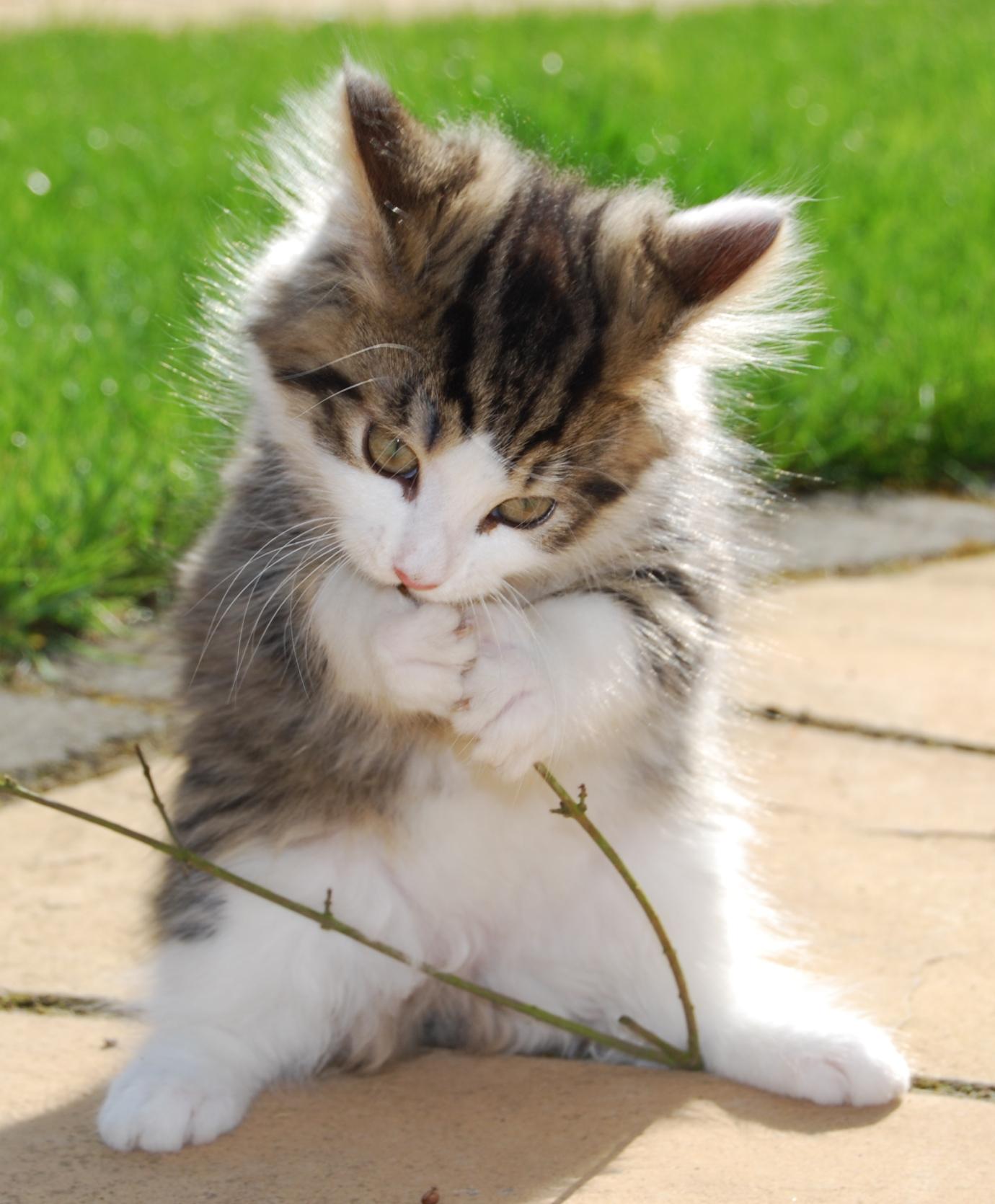 Kitten Sitting Hull
