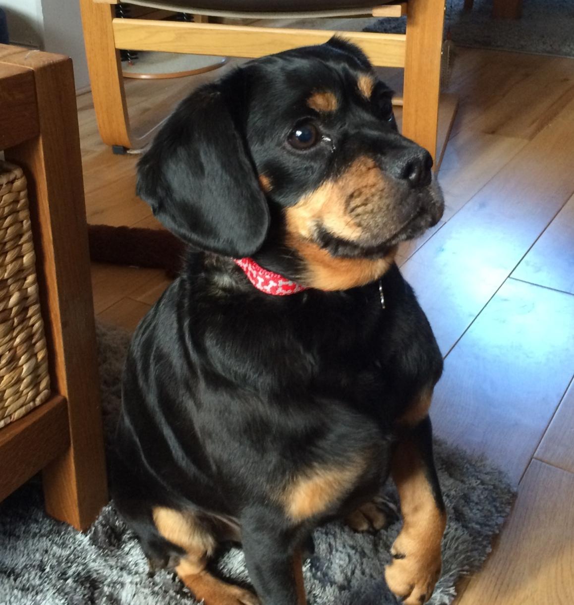 Dog Sitting Hull