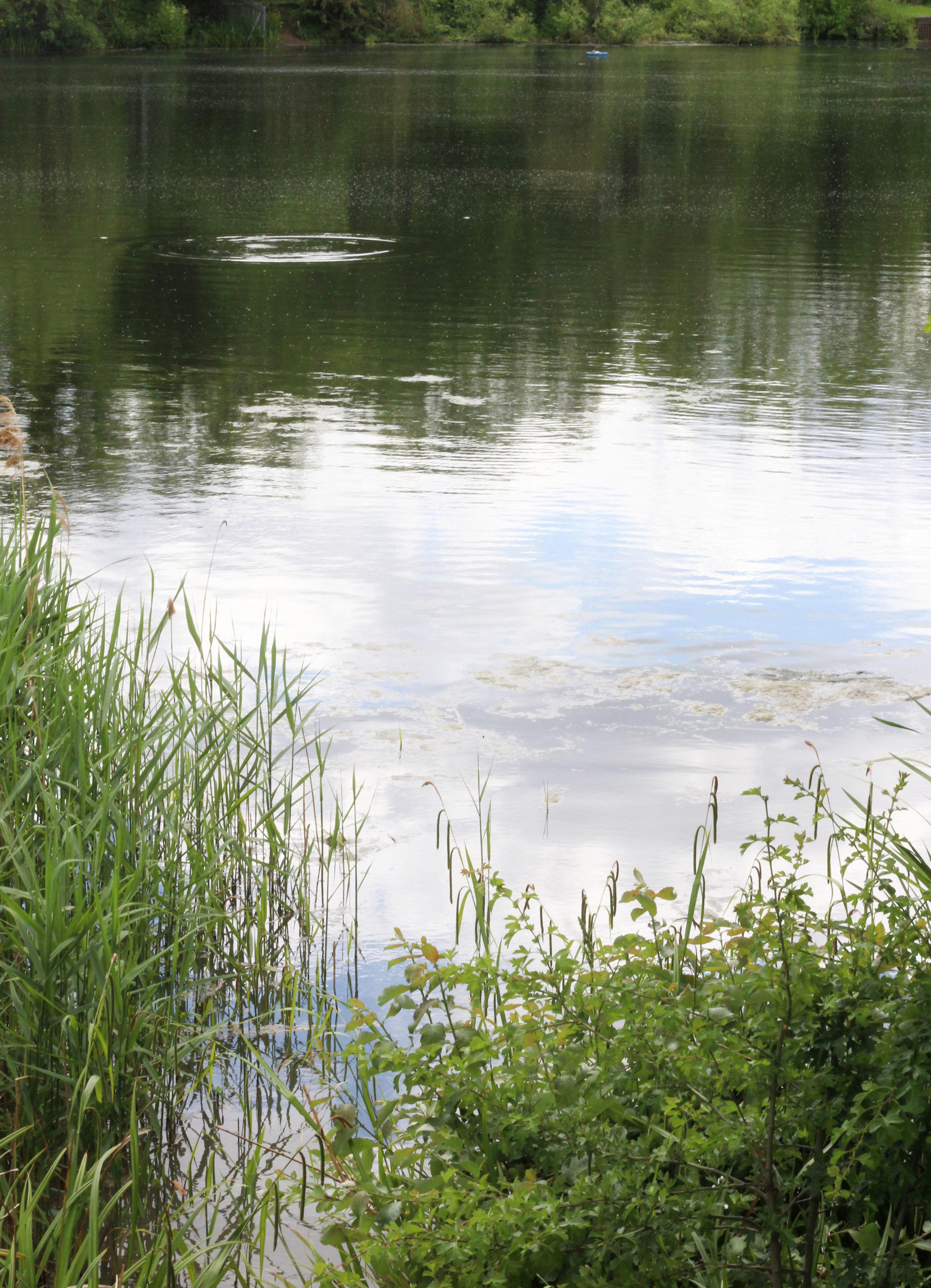 trees-pond.jpg