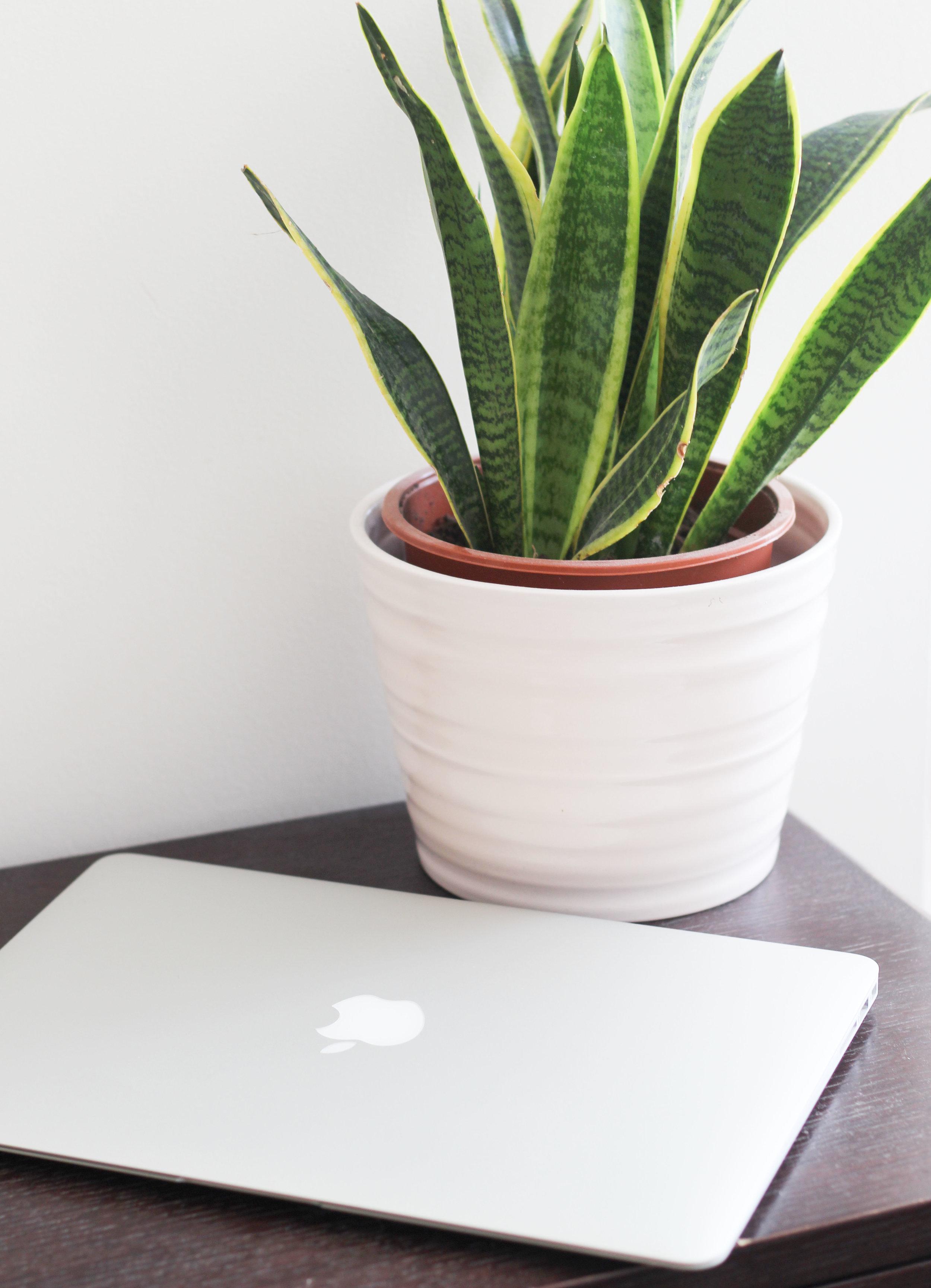laptop_plant.jpg