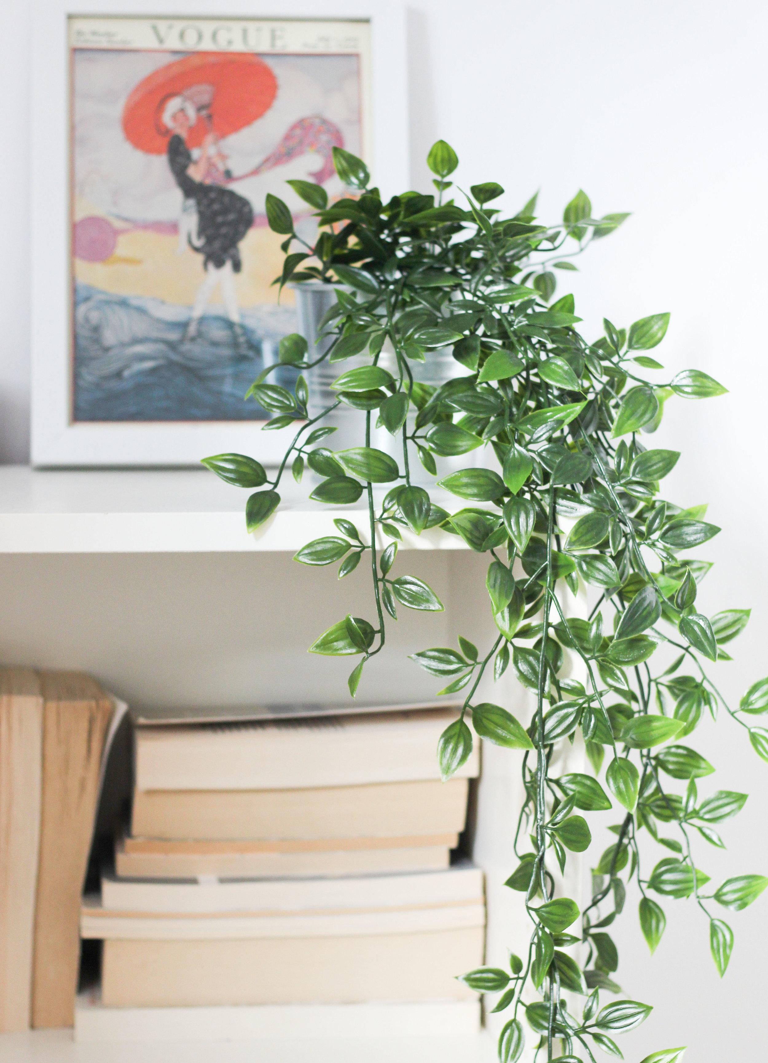 bookshelf_plant.jpg