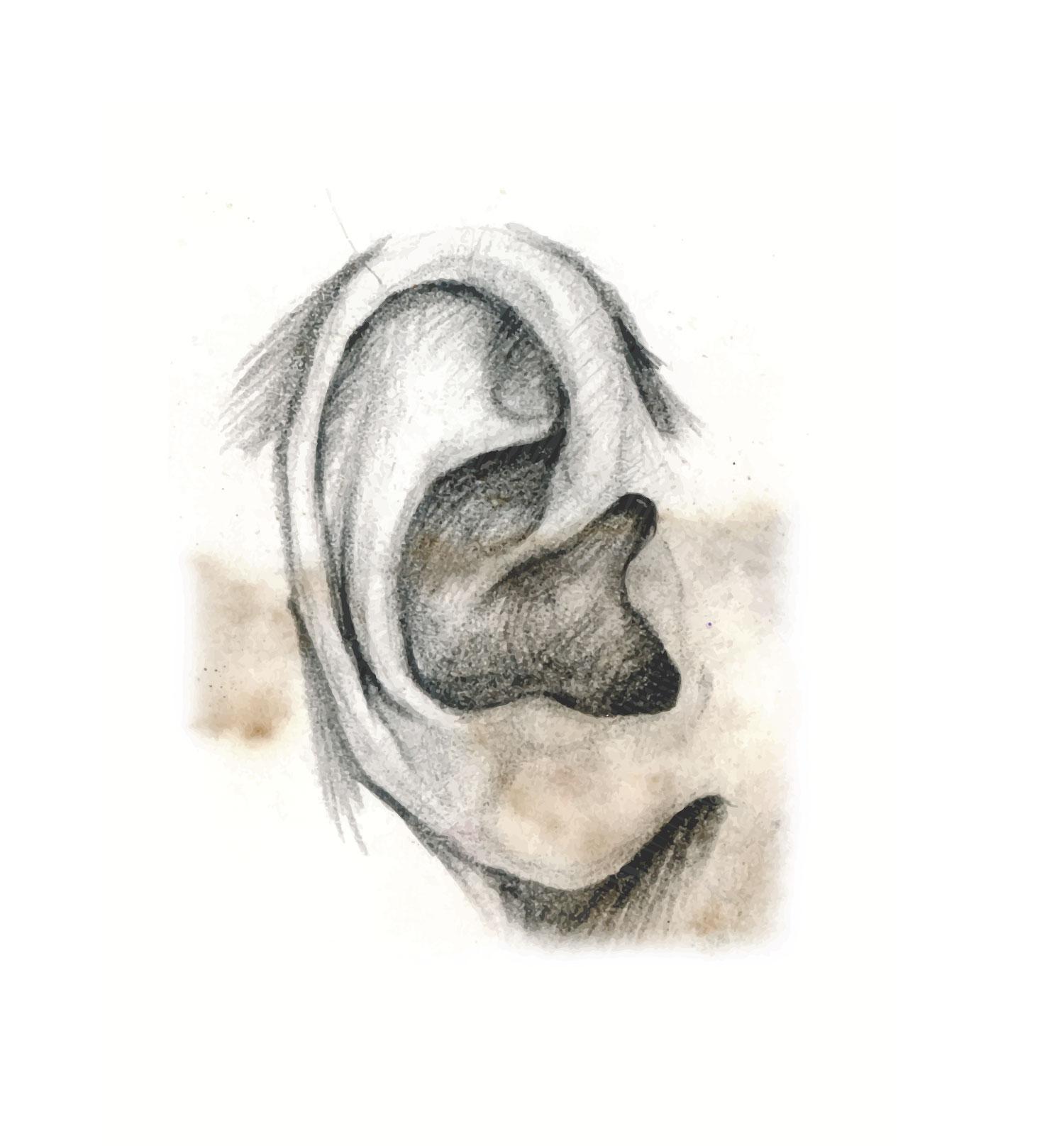 ear-sketch.jpg