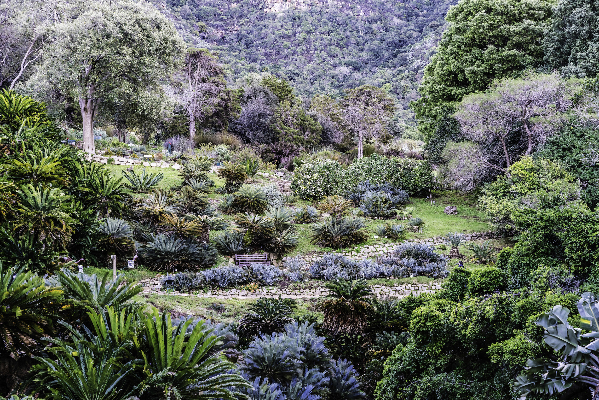 Kirstenbosch National Botanical Gardens, Cape Town SA
