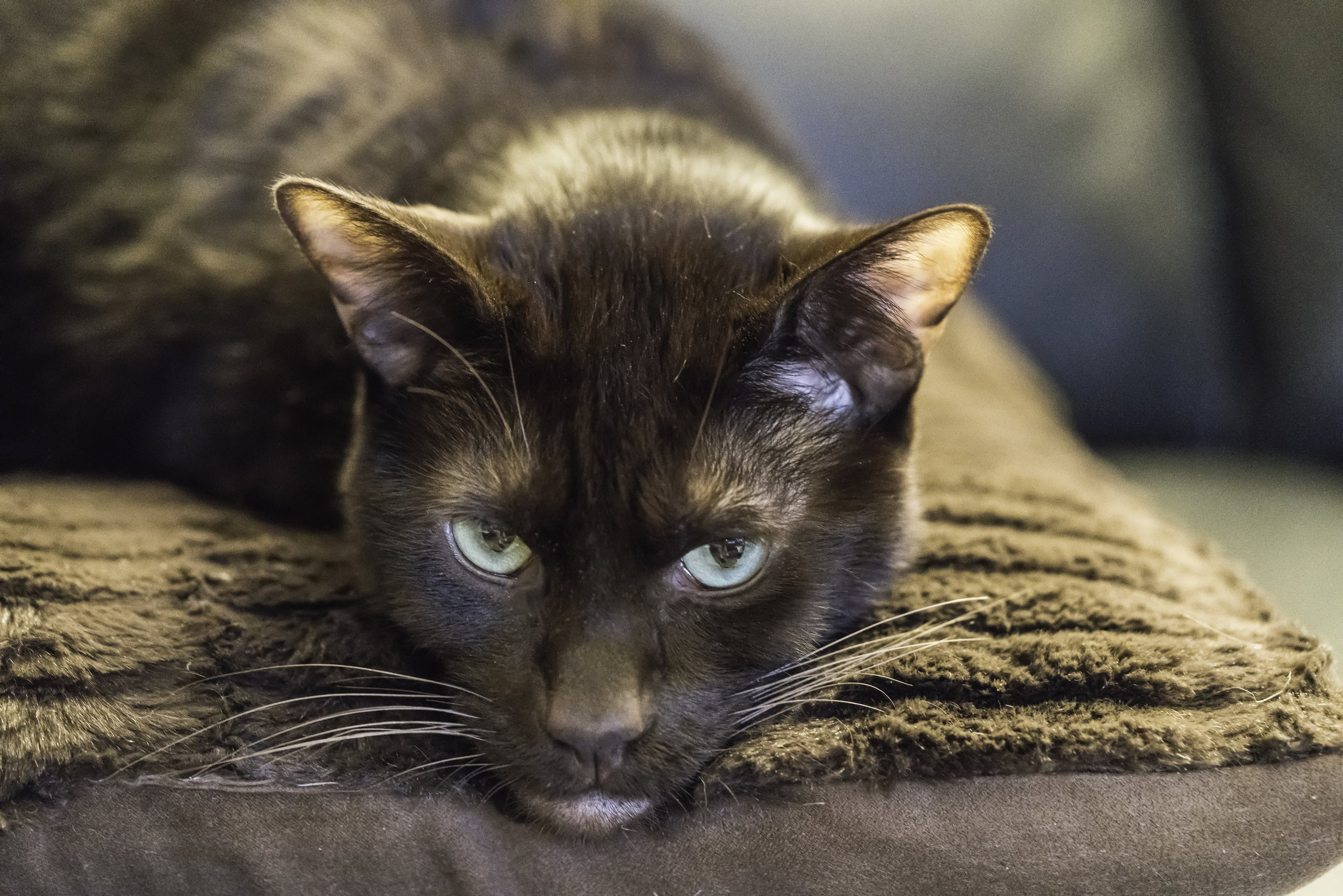 Pet Coco, 2015, posing