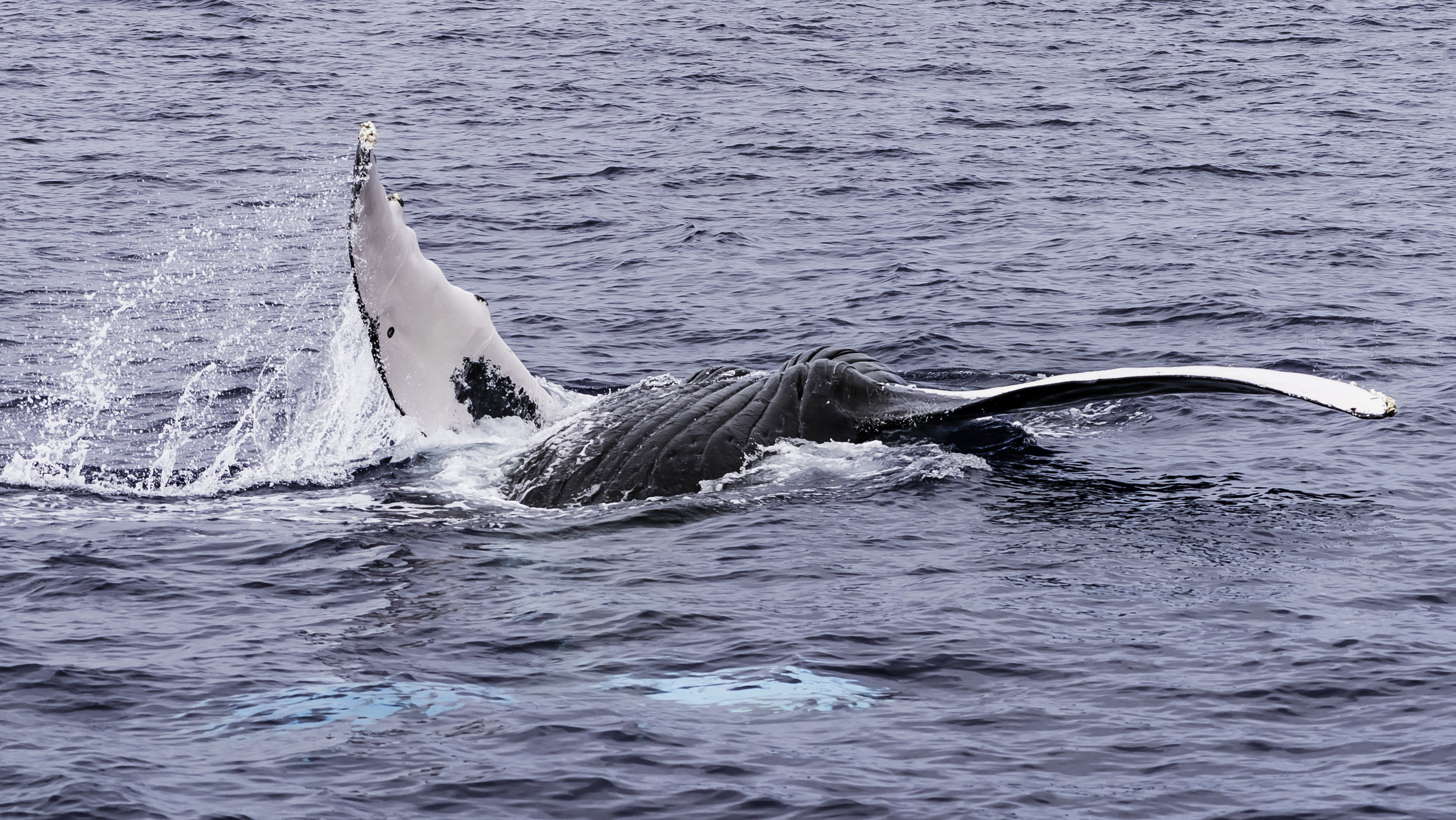 Upside Down Whale 2.jpg