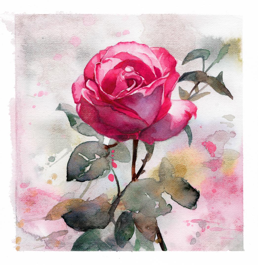 rose - 15.5 x 15 cm.jpg
